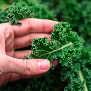 Oxalates on Your Guide To Antinutrients from Plants